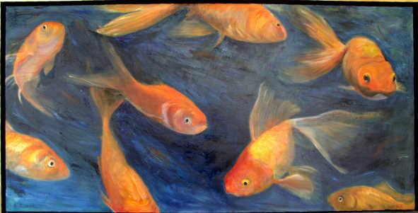 goldfish-carasi-ornamentali