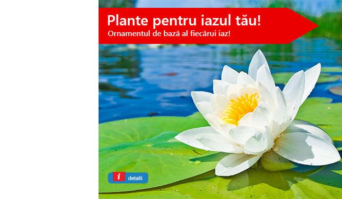 Plante iaz